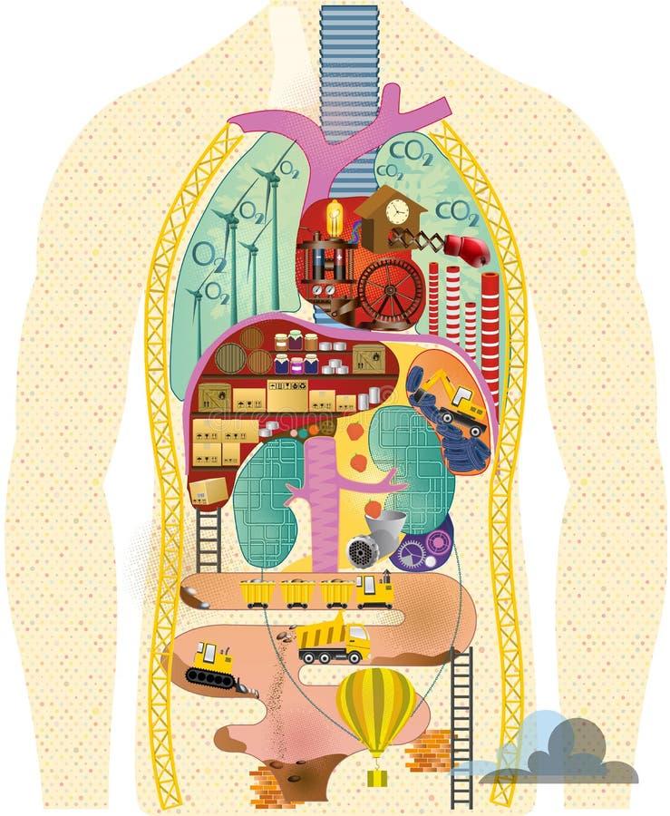 Anatomisk tecknad filmöversikt stock illustrationer