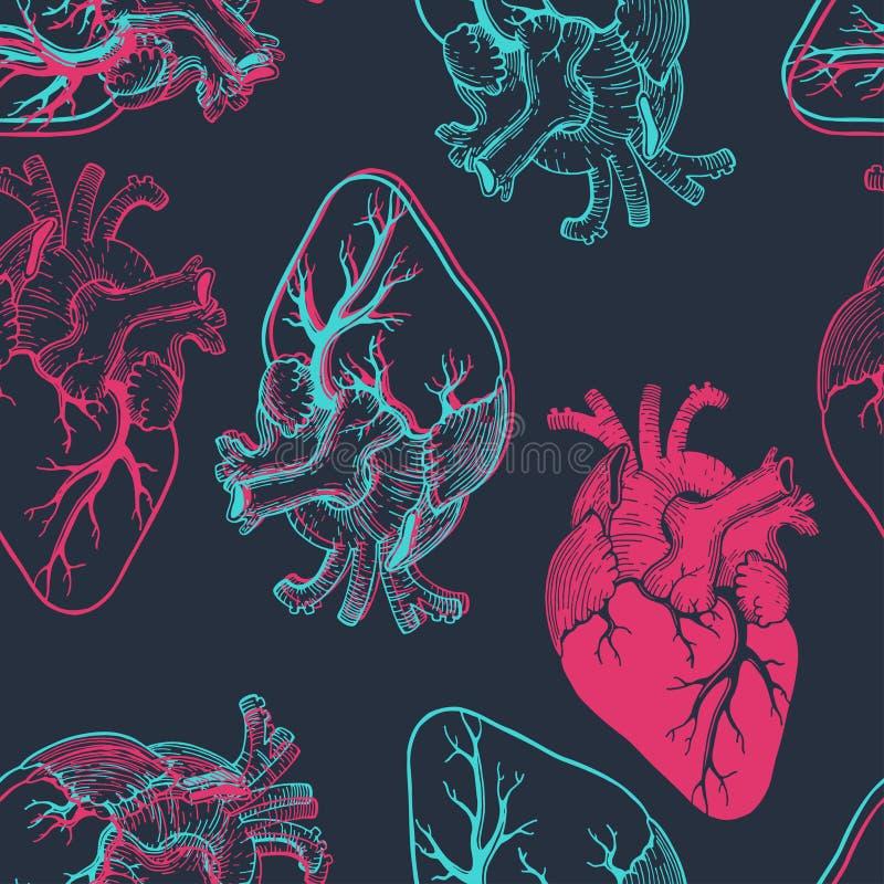 Anatomiska hjärtor stock illustrationer
