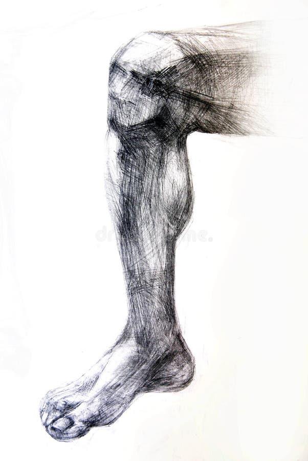 anatomiteckningen tränga sig in studioarbeten stock illustrationer