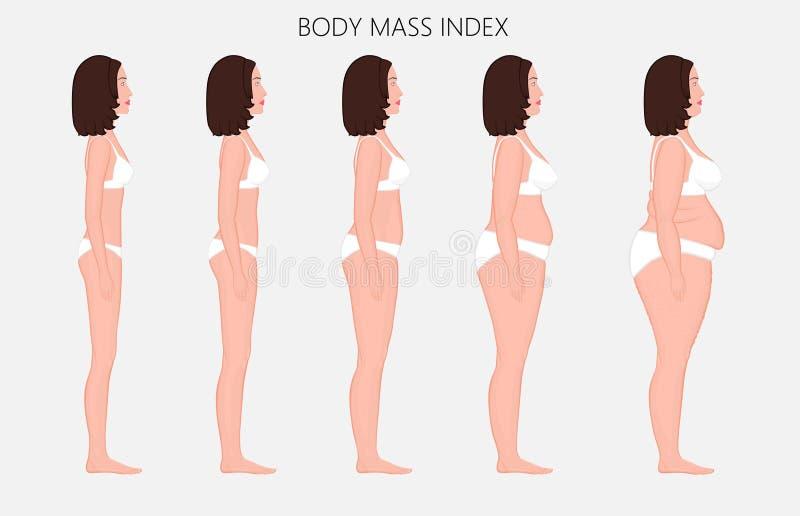 Anatomy_Body massindex för människokropp av europeiska kvinnor från bristnolla royaltyfri illustrationer