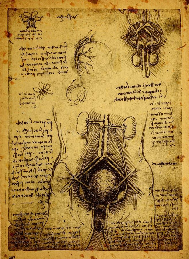 Anatomy Stock Illustration Illustration Of Damaged Paper 37659467