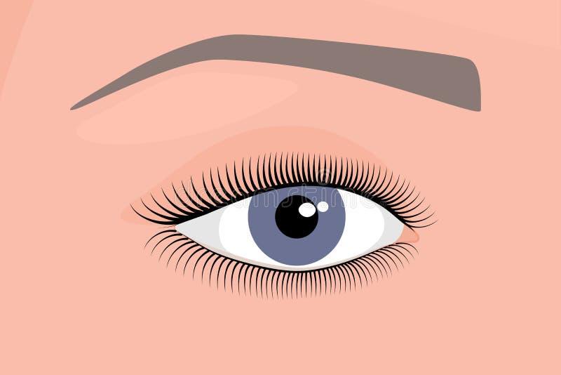 Anatomy_Eye vektor illustrationer