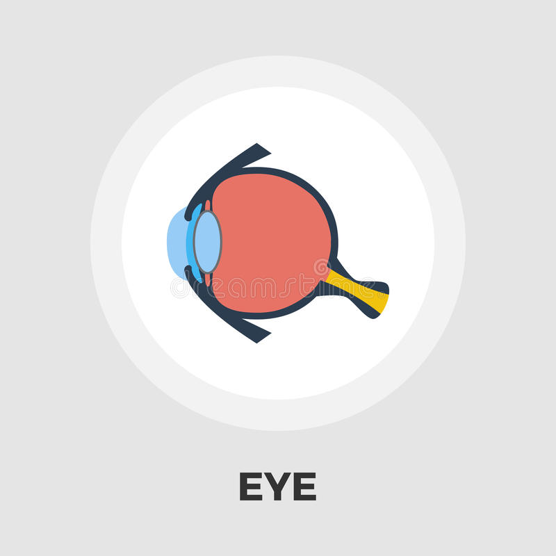 Anatomy eye flat icon. Anatomy eye icon vector. Flat icon isolated on the white background. Editable EPS file. Vector illustration royalty free illustration