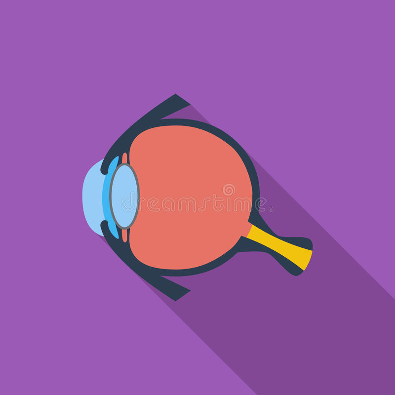 Anatomy eye. Anatomy eye icon. Flat vector related icon with long shadow for web and mobile applications. It can be used as - logo, pictogram, icon, infographic vector illustration