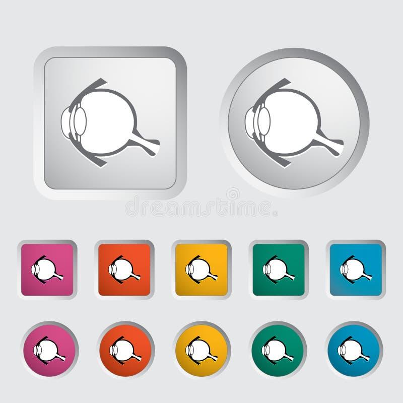 Anatomy eye. Anatomy eye icon. Vector illustration vector illustration