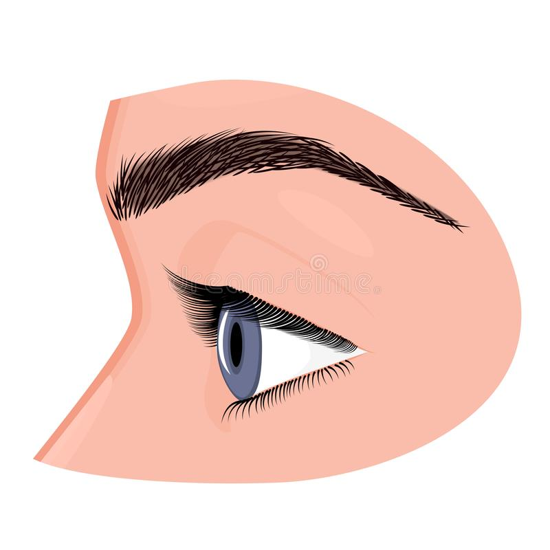 Anatomy_Eye side view. Vector illustration. Anatomy of a human eye, side view. Close-up and macro view. For advertising and medical publications. EPS 8 royalty free illustration