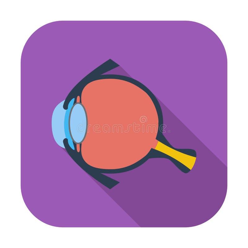 Anatomy eye. Single flat color icon. Vector illustration vector illustration