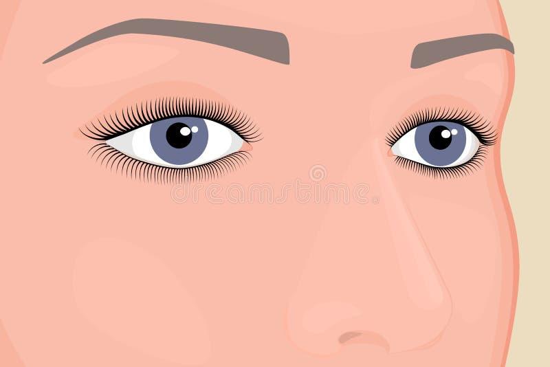Anatomy_Eyes vektor illustrationer