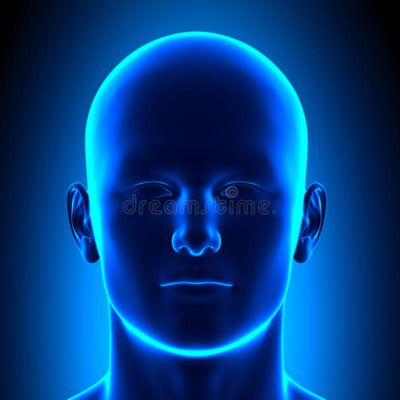 Anatomy Head - Front View - Blue concept stock illustration