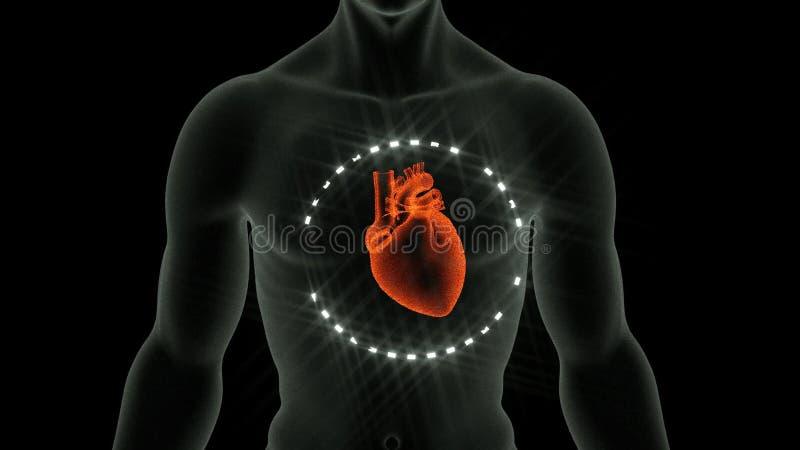 Anatomy Of The Heart stock video. Illustration of artery - 46379705