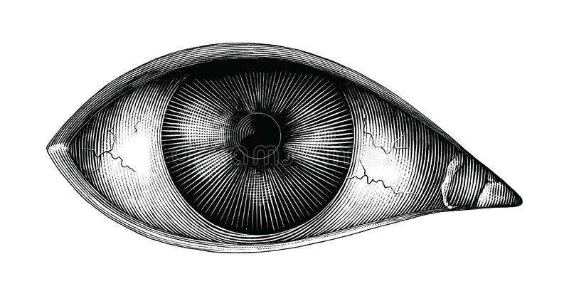 Anatomy of human eye hand draw vintage clip art isolated on white background royalty free illustration