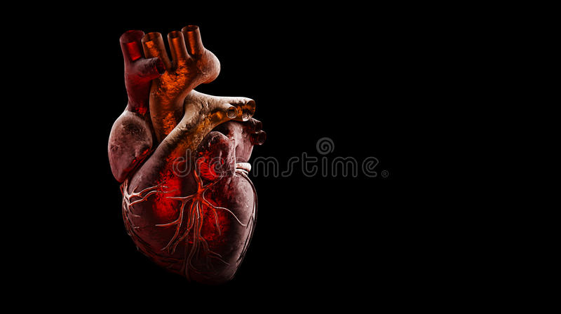 Anatomy of Human Heart Isolated on black stock photos