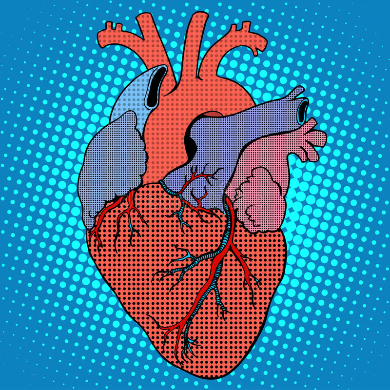 Anatomy human heart retro style vector illustration