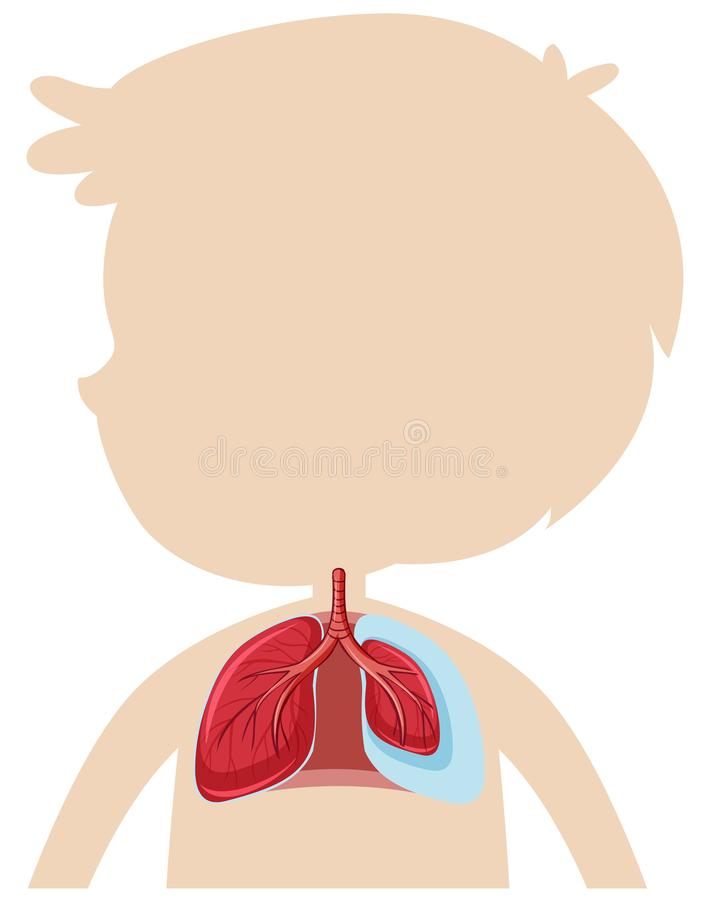 An Anatomy of Human Lung. Illustration royalty free illustration