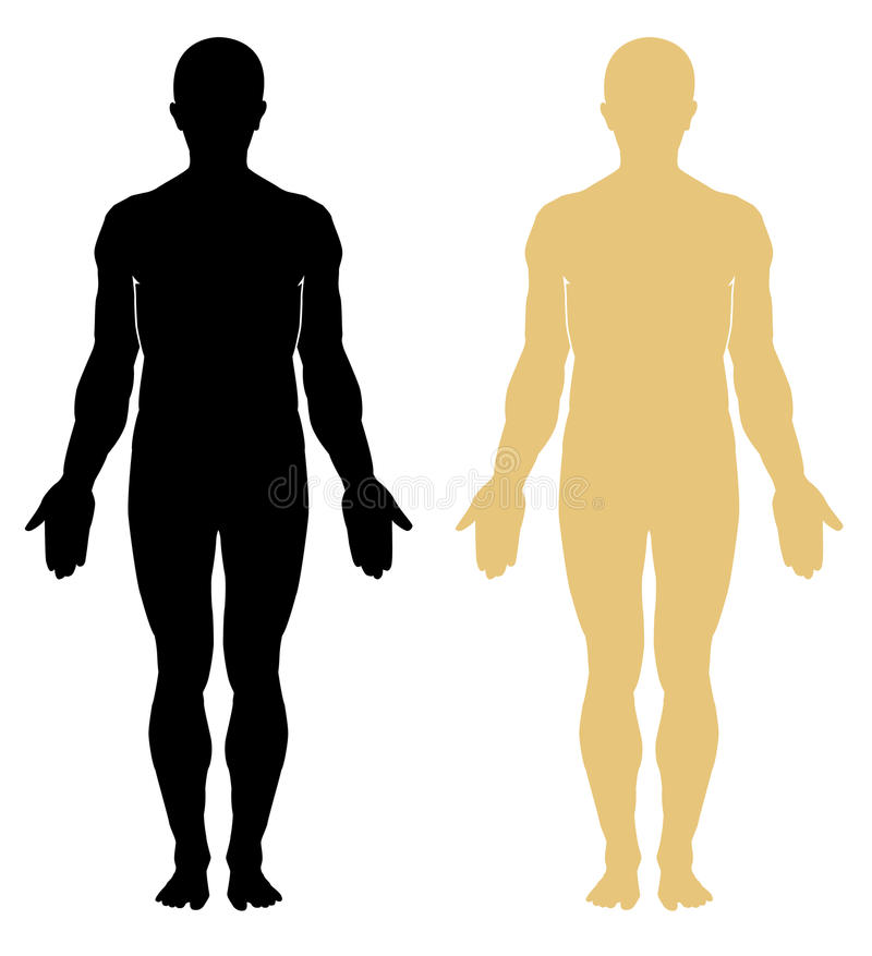 Anatomy. Male body stock vector. Illustration of medical - 22610815
