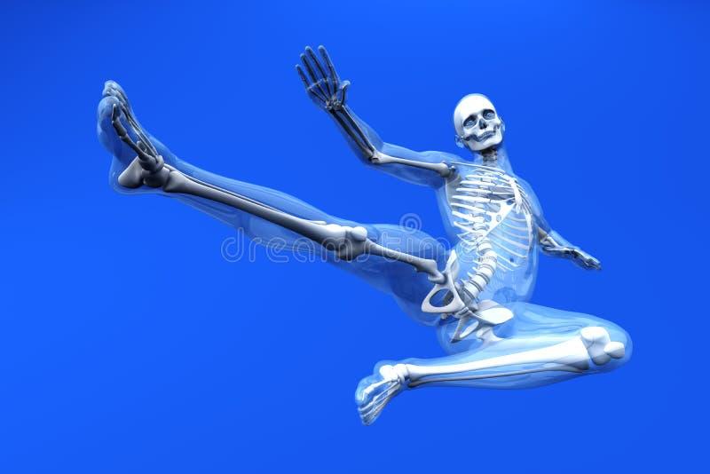 Anatomy - Martial Arts vector illustration