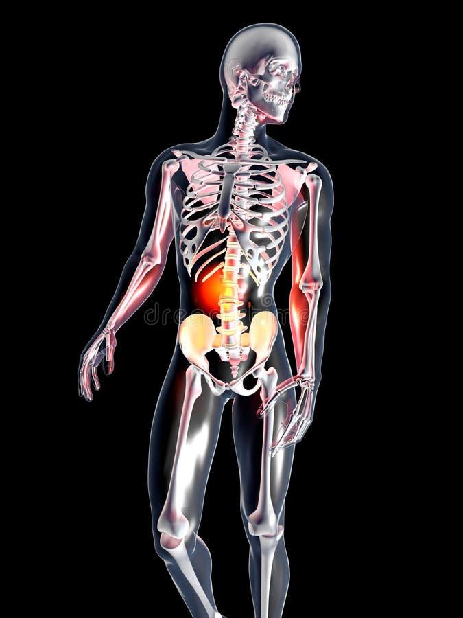 Anatomy - Stomach vector illustration