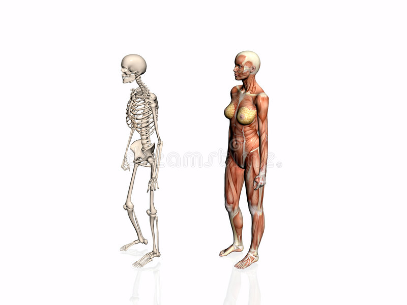 Anatomy Of The Woman With Skeleton. Royalty Free Stock Photo