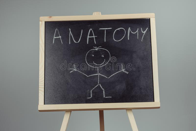 Anatomy word written on chalkboard. Gray background, biology, blackboard, brain, human, body, health, intelligence, medical, science, anatomical, bladder stock image
