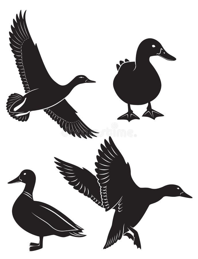 Anatra illustrazione di stock