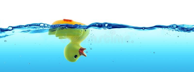 Anatra annegata - guasto fotografie stock