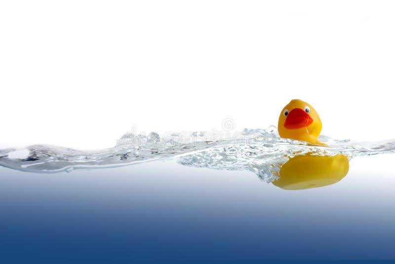 Anatra di gomma in acqua immagine stock