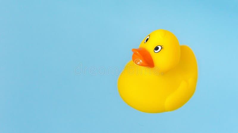 Anatra di gomma gialla del bagno in acqua blu immagini stock libere da diritti
