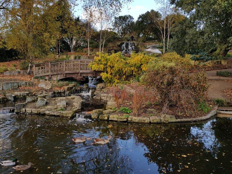 Anatra di lago pond immagine stock