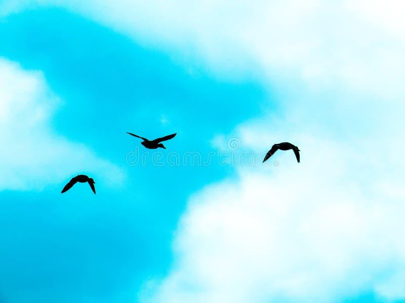 Anatre che volano attraverso Aqua Blue Sky intelligente fotografia stock libera da diritti