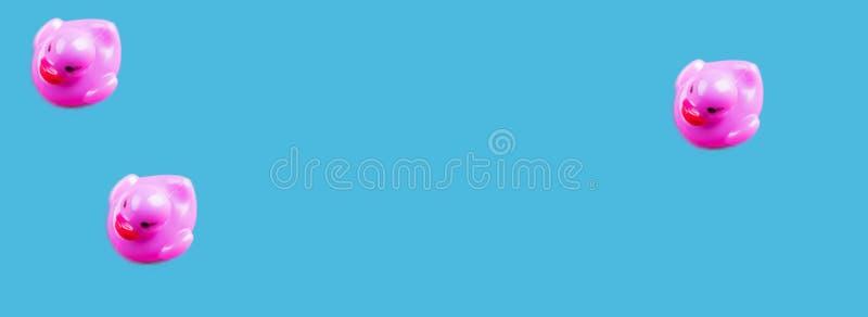 Anatre di gomma di fascino porpora su fondo blu immagine stock