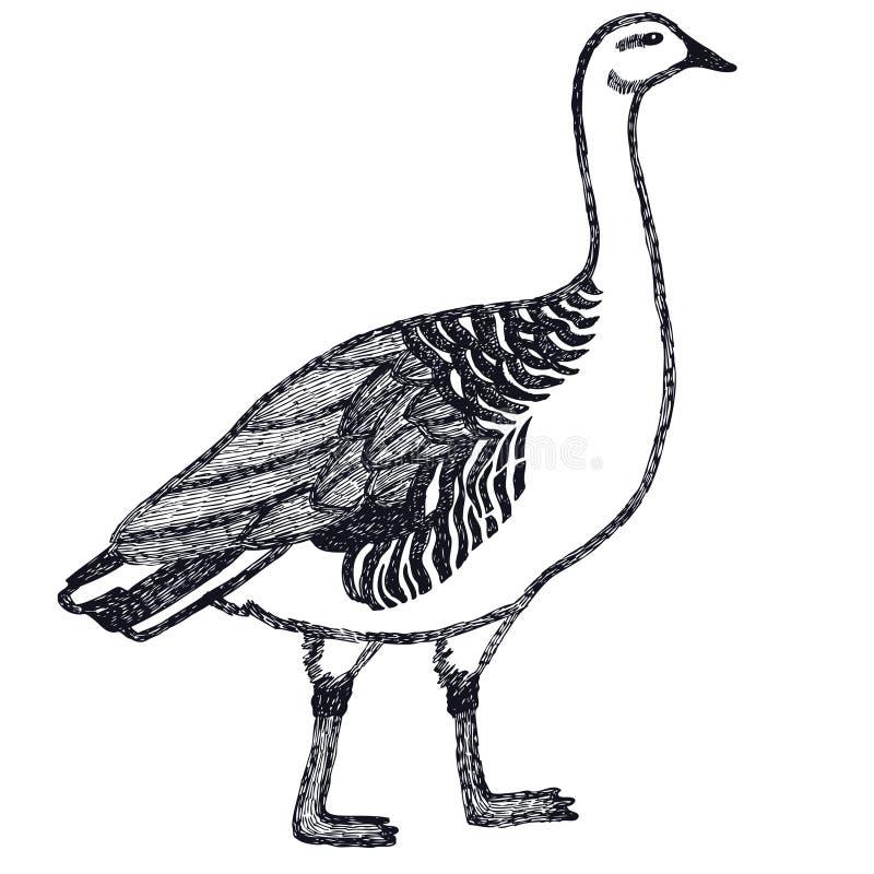 Anatre ed oche dell'illustrazione di vettore del disegno della mano l'oca della regione montana illustrazione vettoriale