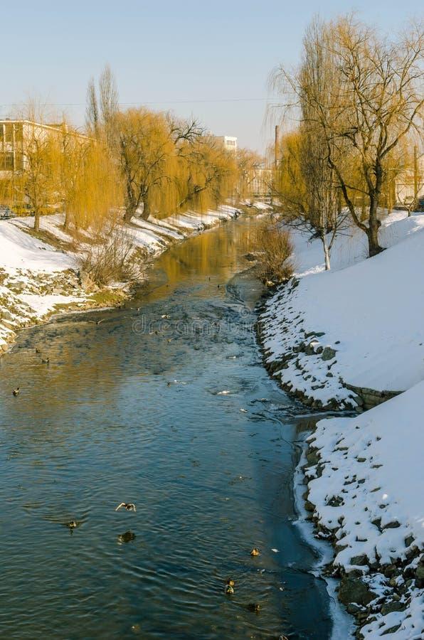 Anatre sul fiume fotografia stock libera da diritti