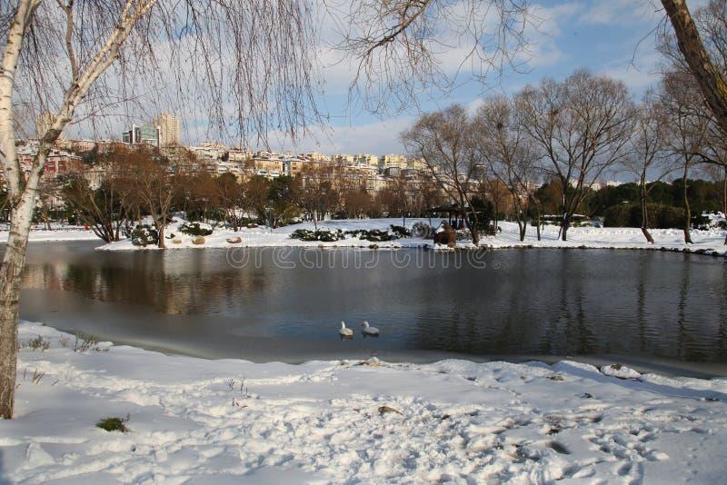 Anatre sul lago congelato fotografia stock libera da diritti