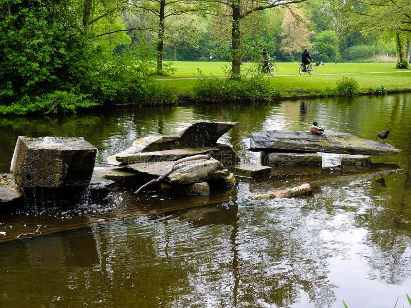 Anatre in un fiume a Amsterdam fotografia stock libera da diritti