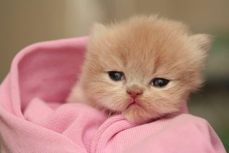 Anblick eines kleinen netten flaumigen Kätzchens lizenzfreies stockbild