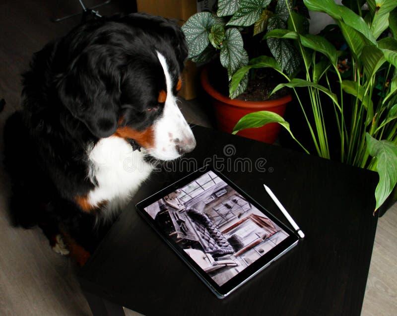 Anche il cane ha gradito questo progetto Progetto di architettura del pæsaggio immagine stock libera da diritti