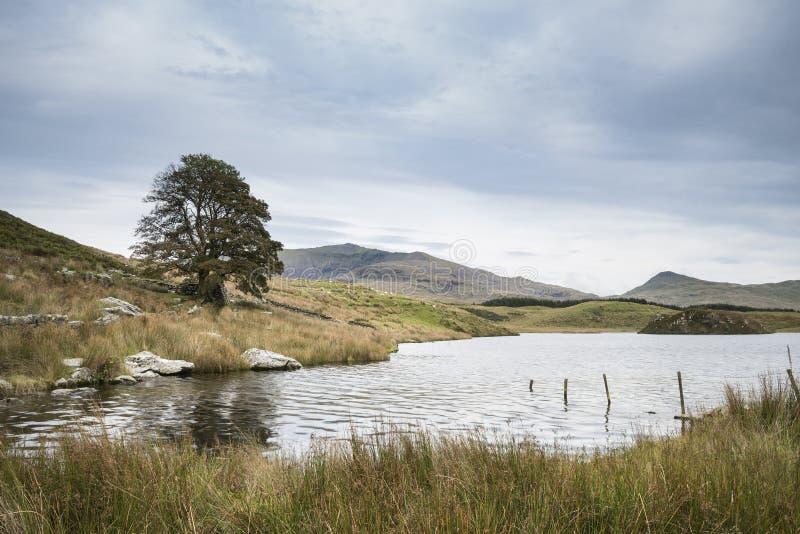 Anche immagine del paesaggio del lago Llyn y Dywarchen in autunno in Sn immagini stock