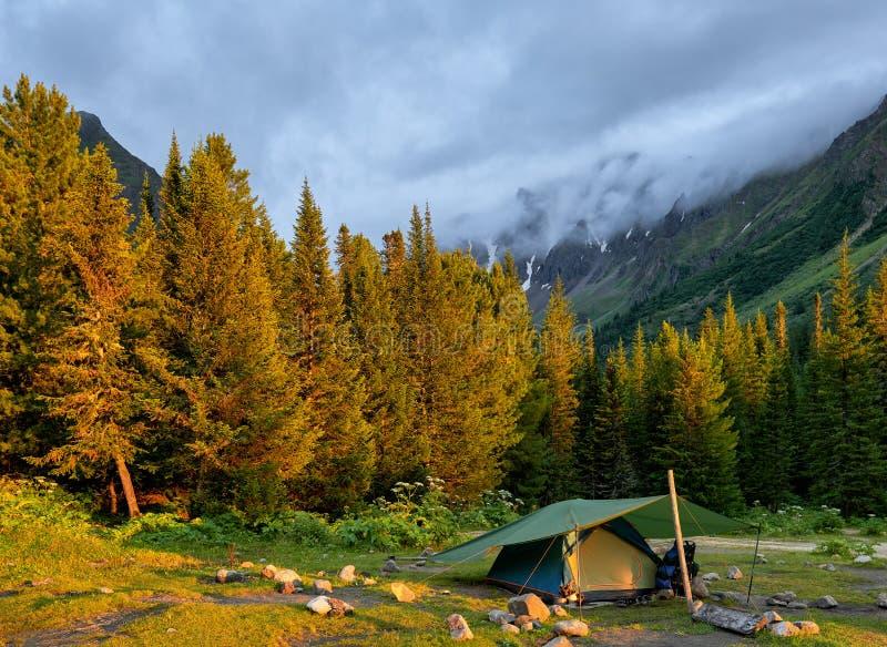 Anche la luce solare illumina il bordo del taiga conifero scuro immagini stock libere da diritti