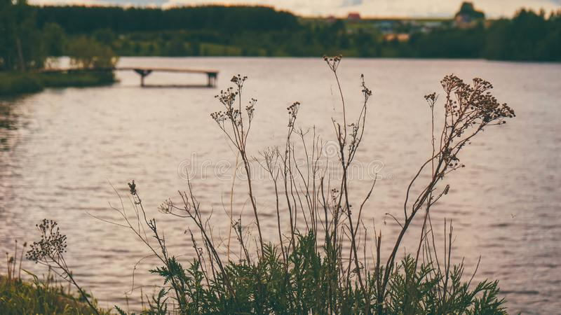 Anche paesaggio nelle piante dello stagno della Russia immagini stock