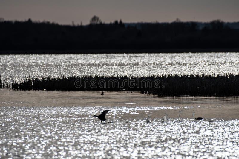 Anche tempo nel lago fotografia stock libera da diritti