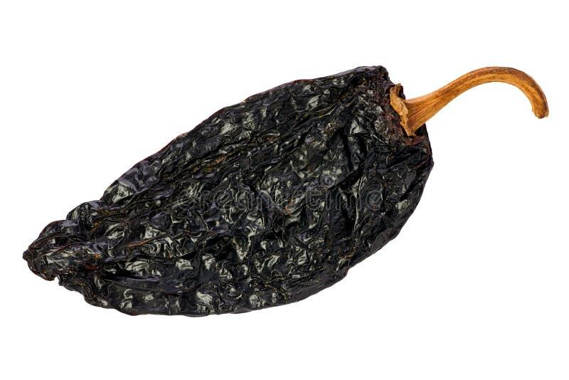Ancho Chili (Capsicum annuum) stock photo