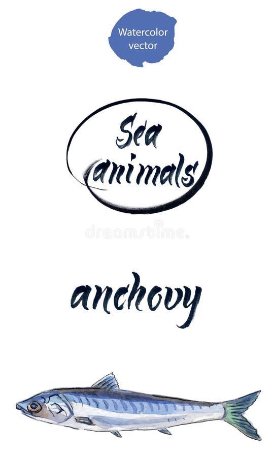 Anchoa fresca, anchoa marina de Océano Atlántico o pescados de la anchoa del mar libre illustration