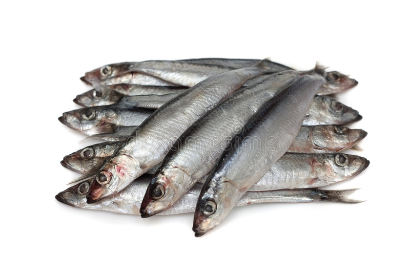 Anchois image stock