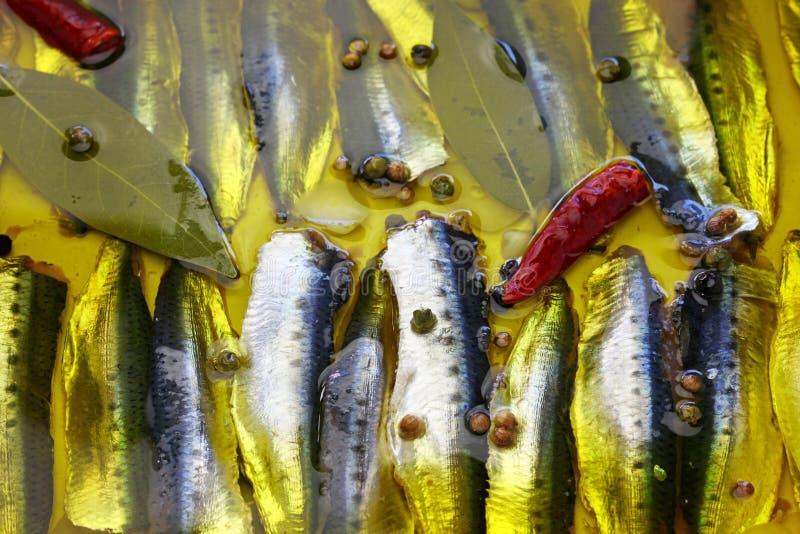 Anchois marinés, nourriture espagnole de tapas photo stock