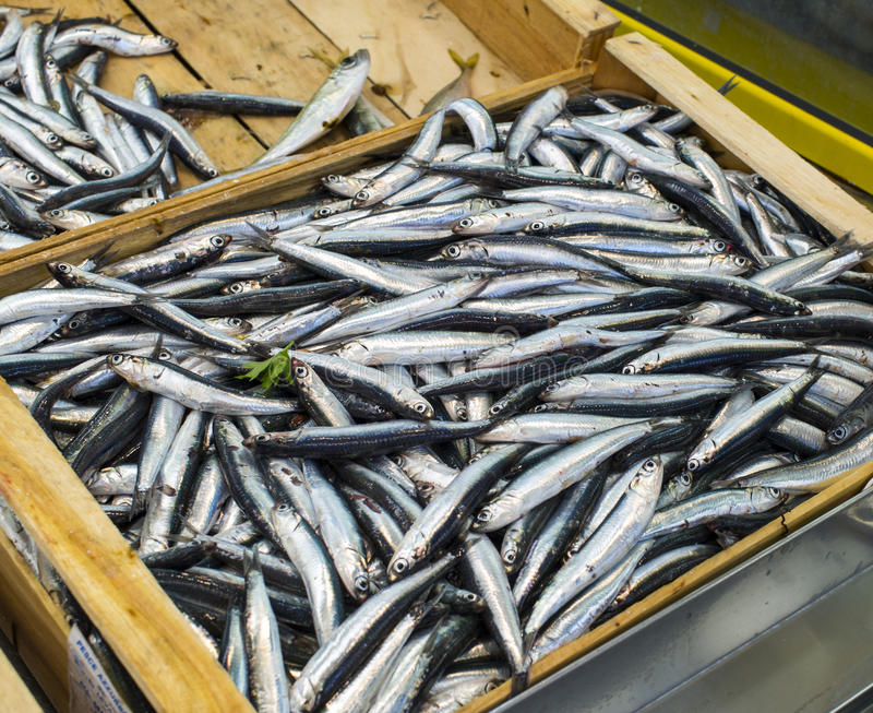 Download Anchovies stock image. Image of food, omega, ocean, nobody - 30920503