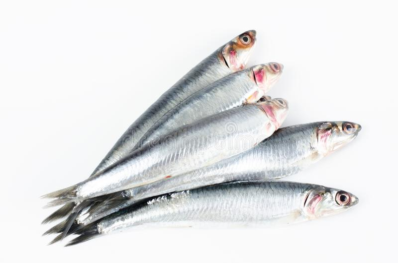 Anchovies on white background. royalty free stock photo