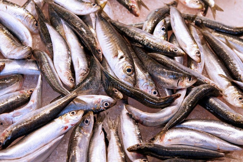 Download Anchovy Stock Images - Image: 27304824