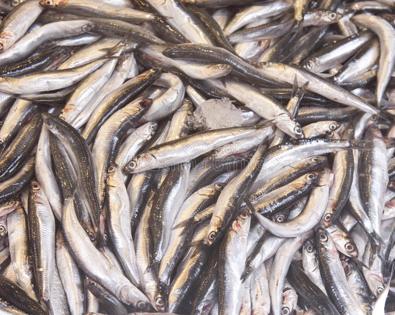 Anchovy Fish stock images