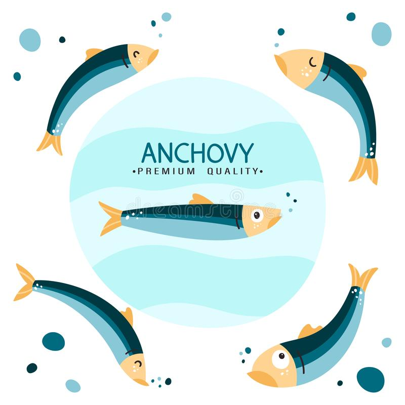 Anchovy fish vector illustration. Small salted fodder fish of the Engraulidae family. Peruvian anchovy. Tasty food stock photos