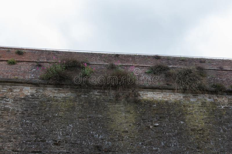 Ancient brick wall. Plants are growing through bricks royalty free stock images